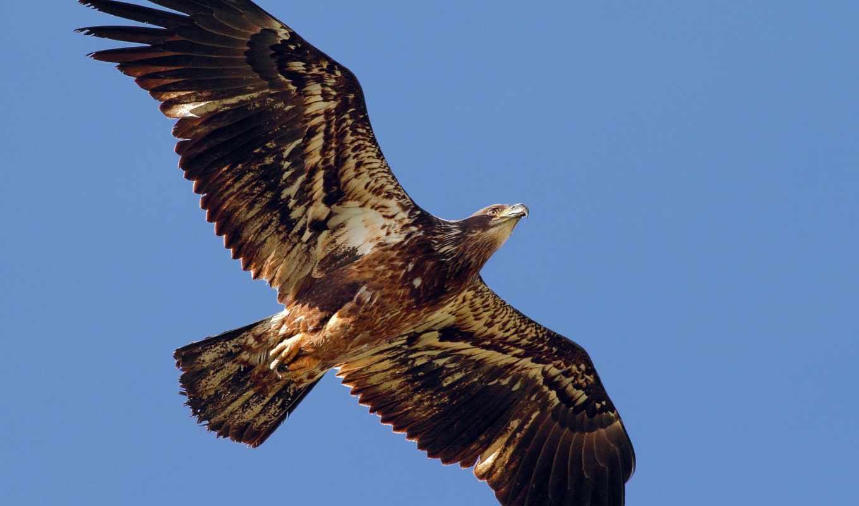 ,орел,небо,полет,крылья,