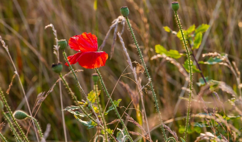 summer, лепестки, луг, трава, марта, цветы,