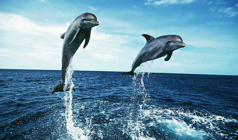 Картинки красивые обои дельфинов на телефон, картинки