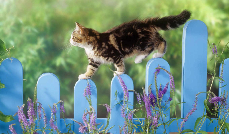 animaux, fonds, ecran, images, fleurs, chaton, chats, sur, des, chat,