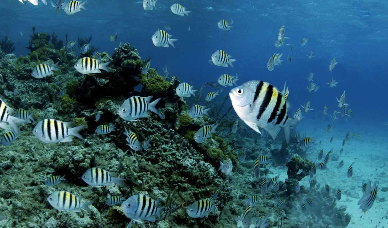 world, underwater, фотообои, zhivotnye, pisces,