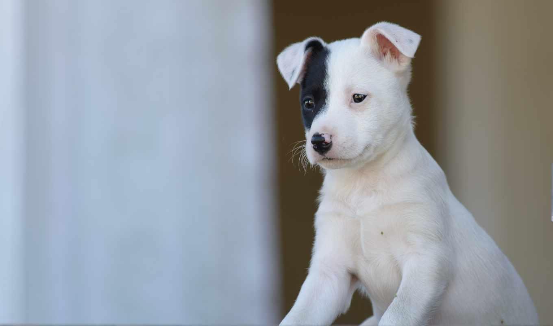 alcatel, animaux, собака, щенок, песик, от, собаки, chiens, animal,