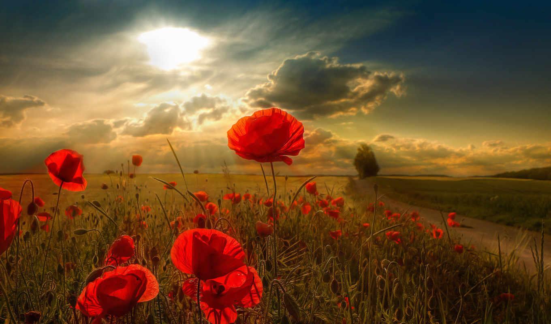 цветы, солнце, тучи, poppy, картинка, scenery, fotos, поле, бесплатные, that, картинку, natural, sunlight,