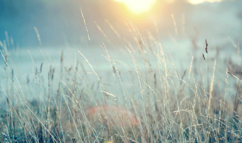 трава, поле, sun, природа,