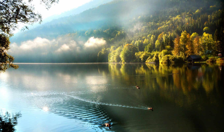 утро, озеро, туман, утки, лес, горы, природа,