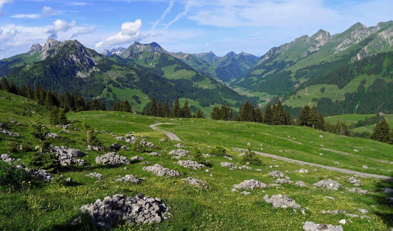 природа, красивая, мб, количество, зелёный, трава, картинка, desktop,