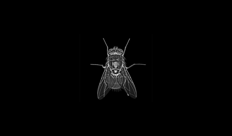 муха, хоботок, глаза, лапки, вода, крылья, насекомое,