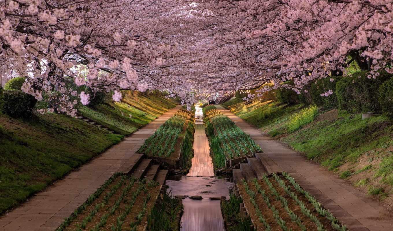 японии, пейзажи, agustin, rafael, reyes, фотограф,