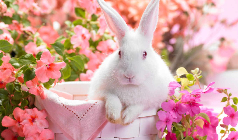 весна, season, flowers,