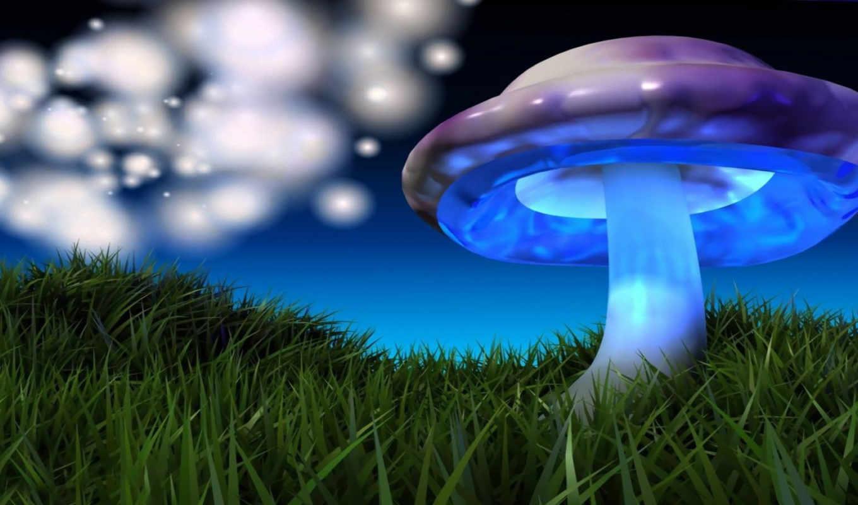 mushroom, грибы, colorful, картинка, трава, зелёная,