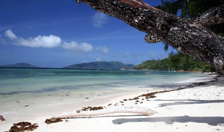 берег, more, океан, песок, трава, деревя, океана, пейзаж, острова, palma, пляж,