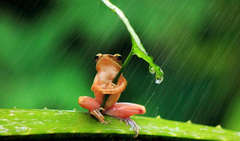 tierna, ranita, lluvia, inteligente, penkdix, palme, fotógrafo, años, encontró,