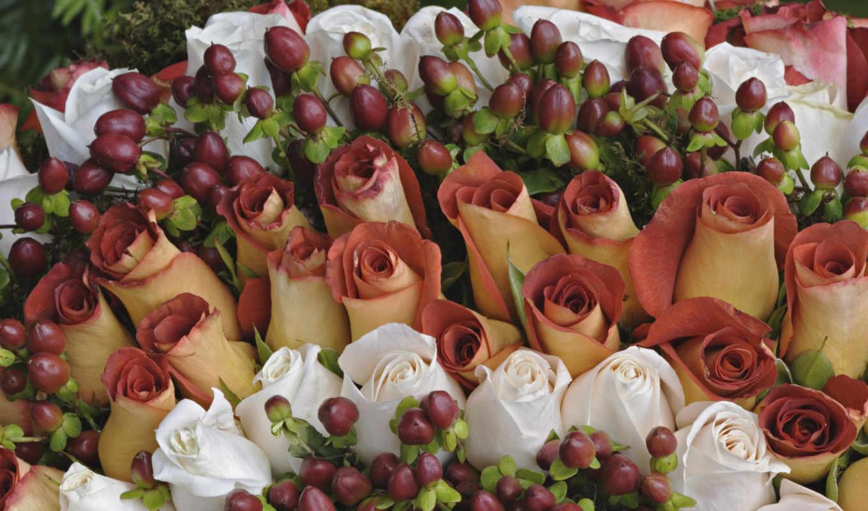 обои, розы, белые, праздник, цветы, фото, обоев, т