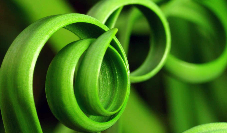 зеленые, растения, природа, трава, ростки, зеленое, iphone, загогулина, разрешении, green, чтобы,