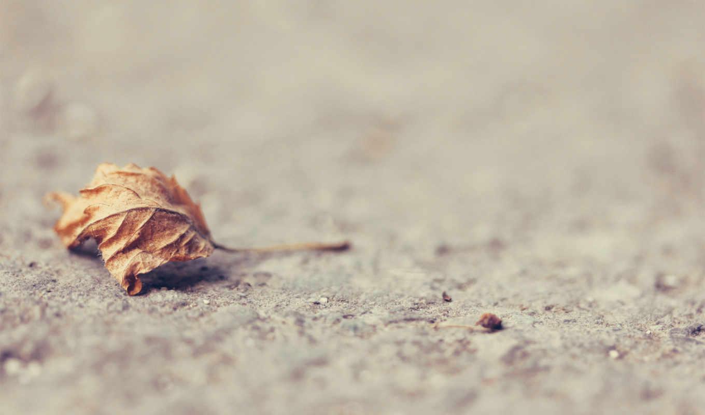 лист, сухой, поверхность, земля, картинка,