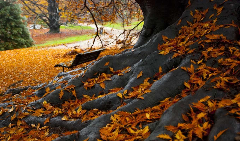 парк, осень, листья, скамья, дерево, дерева,