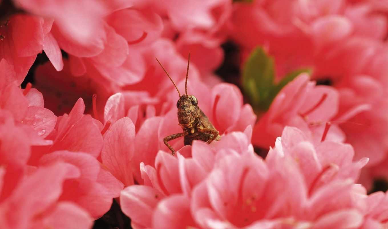 кузнечик,цветы,красные,