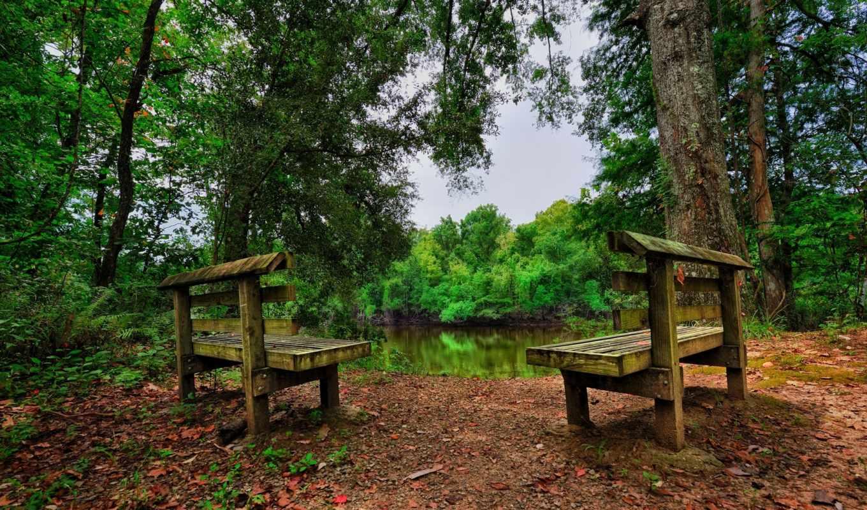 benches, два, лес, природа, озеро, landscape, stars, desktop,