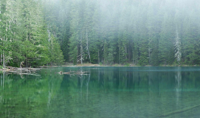лес, озеро, вода, деревья, природа, пейзаж, картинку, выберите, hd, мыши, правой, кнопкой, туман, wallpaper, отражение, скачивания, lake, forest, картинка, as, ней, picture, doğa, save, чтобы, разреше