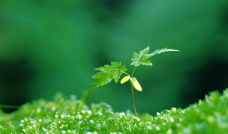 зелёный, растение, листочки, spring, life,