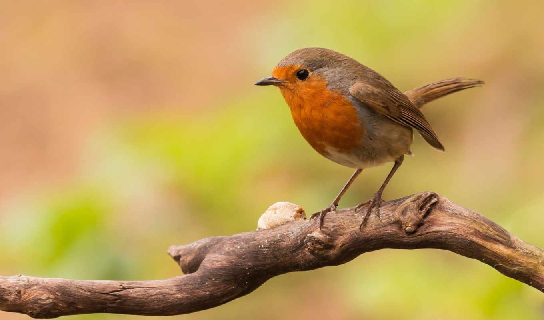 tweet, best, птица, iphone, фея, ветка,