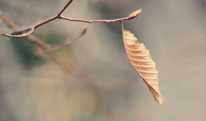 лист, макро, сухой,