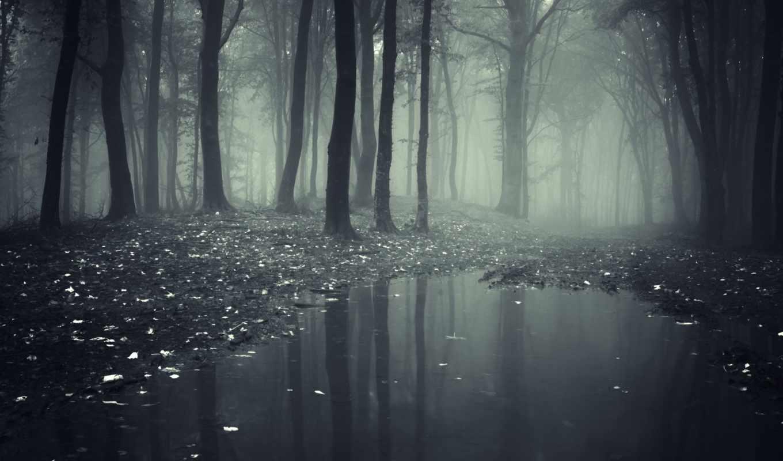 туман, лес, природа, деревья, леса, лужа,