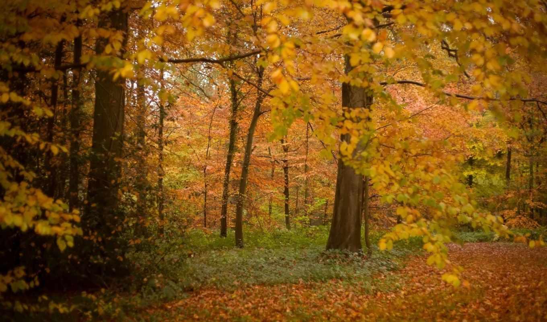 осень, play, лес,
