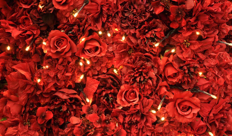 красные, лепестки, розы, роза, маки, red,