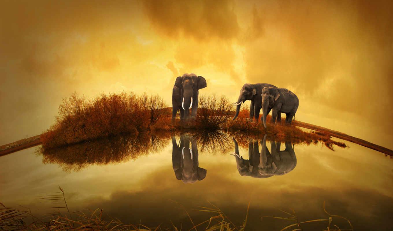 free, природа, photos, закат, слон, фото, таиланд, images, stock, animals, you,