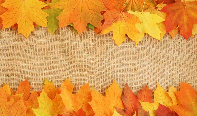 осень, листва, яркие, краски, широкоформатные, прожилки, кленовые, осенние,