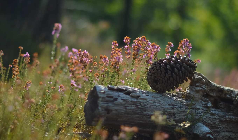шишка, трава, лес, цветы, зелень,