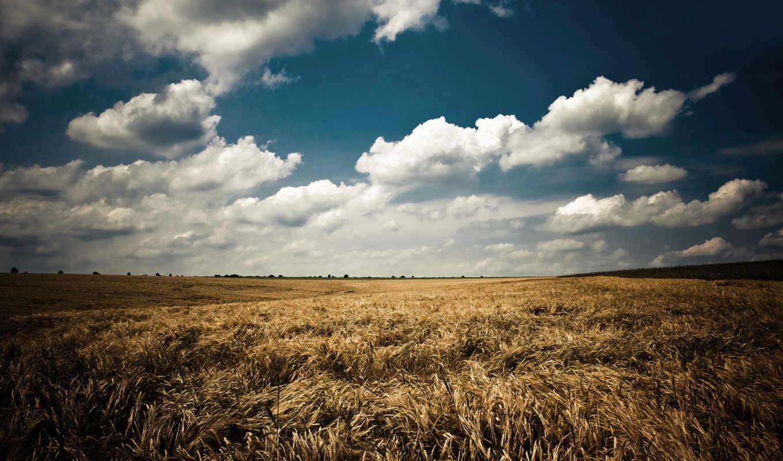 поле, природа, небо, красивое, ним, со, красивая,