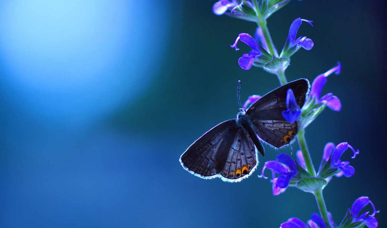 люблю, сообщество, одежды, blue, чтобы, бабочки,