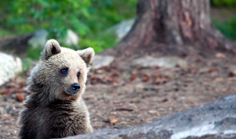 природа, summer, медведь,