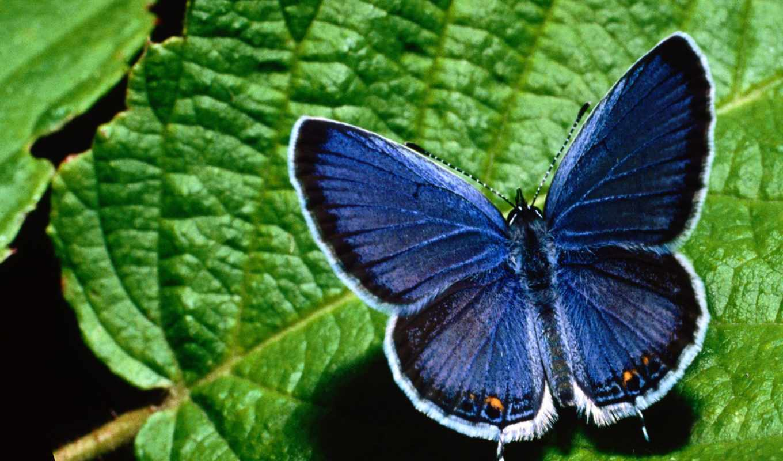 бабочки, бабочка,