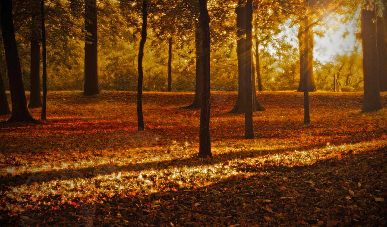 природа, листопад, осень, рисунки, ноябрь, деревя,