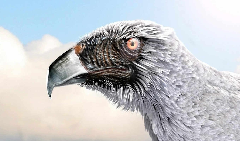орлан, wings, free, об,