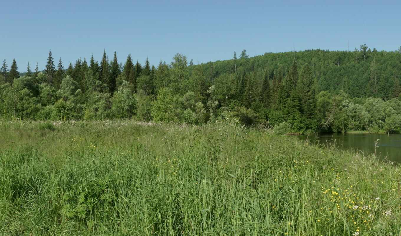 трава, россия, сибирь, summer, природа