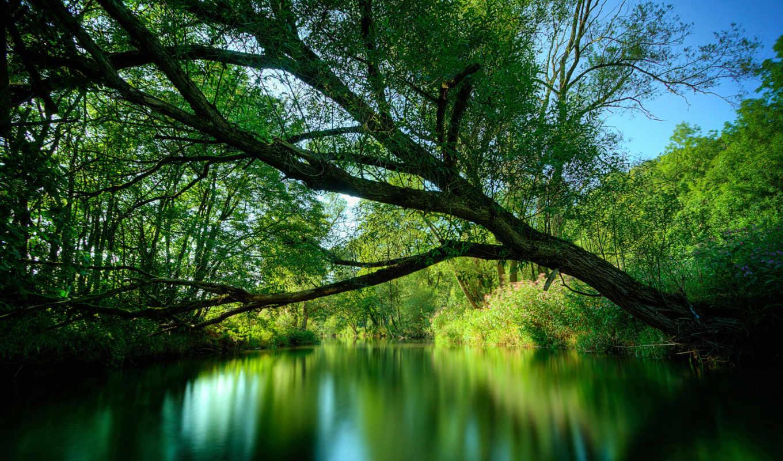 lake, green, река, desktop, free, дерево, bilder, wallse, tropical, nature,