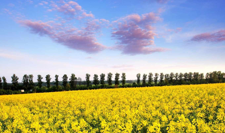поле, mustard, рапс, top, дерево, лет, images,