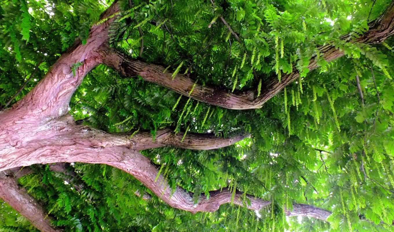 природа, ветки, листья, дерево, ствол,