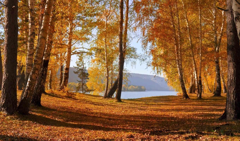 природа, осень, деревья, листья, озеро, картинка,