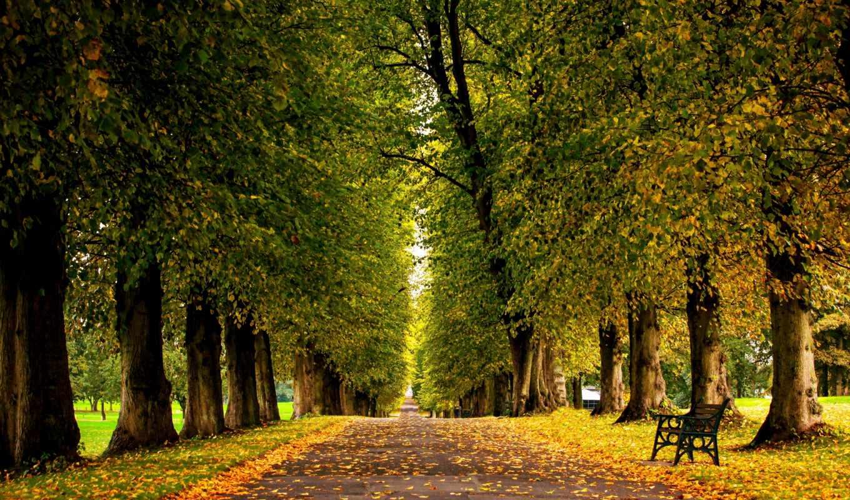 прогулка, листья, дорога, priroda, трава, park, тона, совершенно, лес, hdr, осень,
