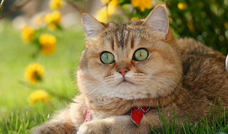 кот, рыжий,зеленые глаза,природа,