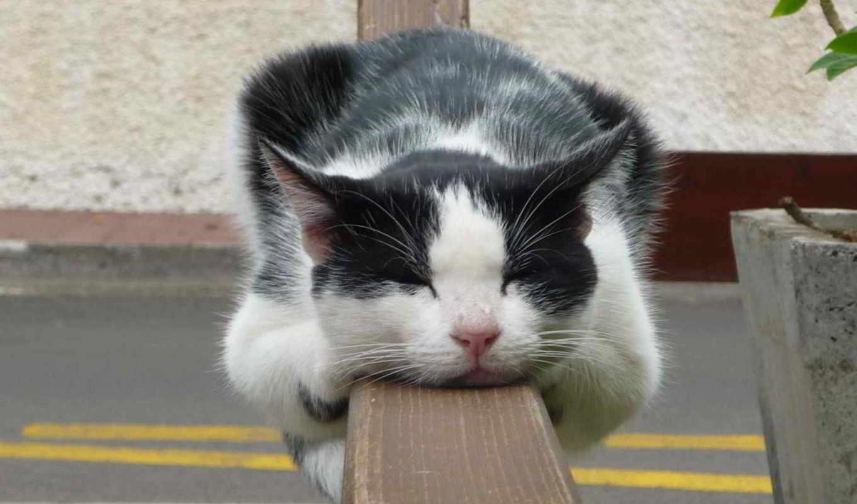 кот, спать, забор, отдых, спит,