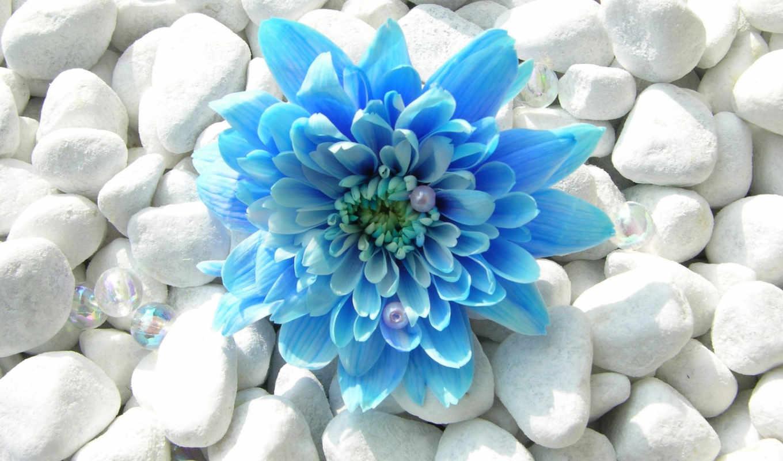 цветы, смотреть, дарю, everything,