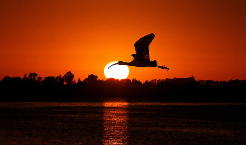 закат, птица, water, полет, трек, trees, reservoir, sun, крылья, закате, лес,