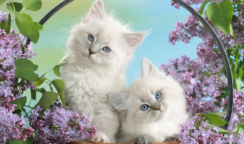 котята, zhivotnye, сирени, весна, сиреневый, яndex, card, online, collections,