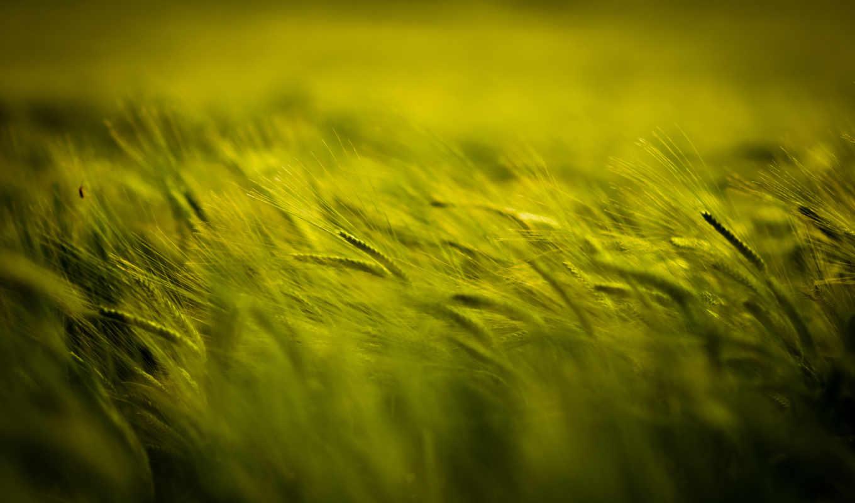 то, рисунки, зеленое, поле, fields, информация,